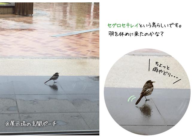 台風の雨宿り、鳥