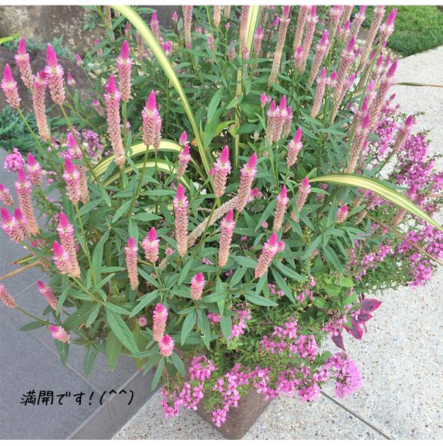 展示場のお花